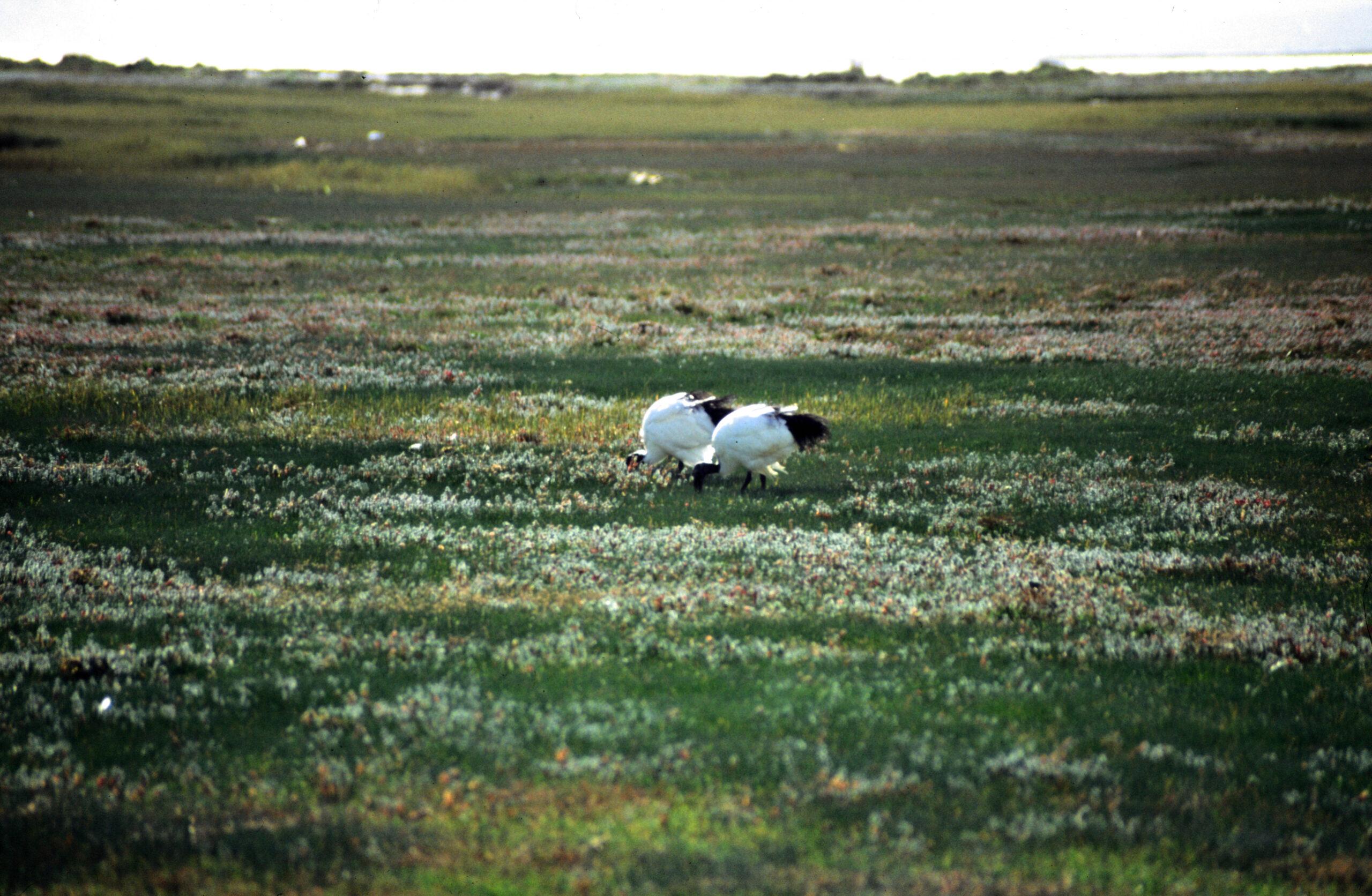 1997-07-ZA&NA-03-Northern Cape