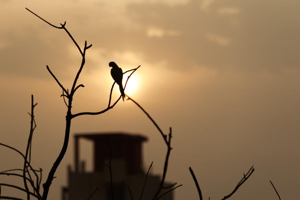 Evening in Jaipur